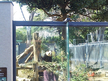 会津高原たかつえ TAKATSUEスタッフブログ☆Takatsue's Back door-上野動物園(パンダ)