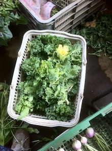 ニイクラファーム ハーブと野菜とエトセトラ-4月2日プチヴェール