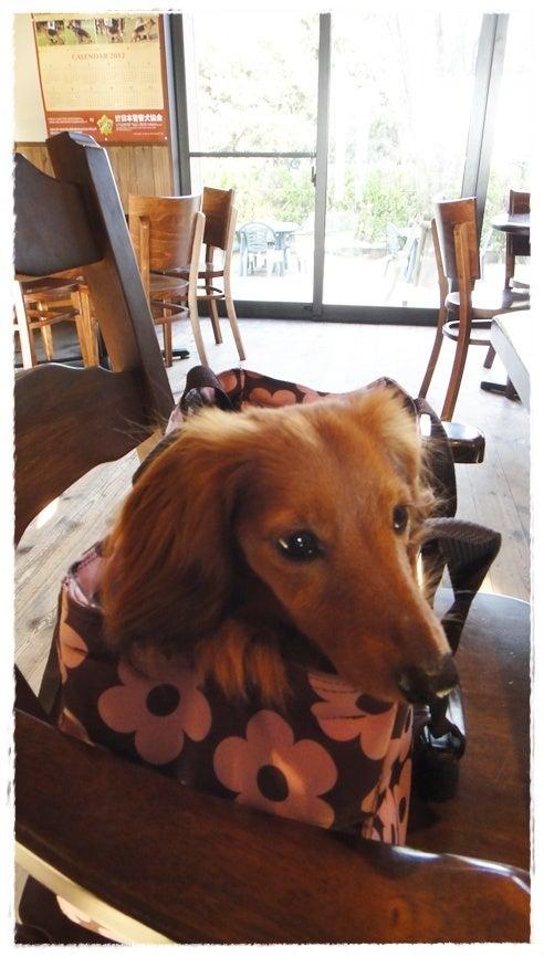 旅犬Lani&Leaのほほん風船記-ウエランカラ九十九里
