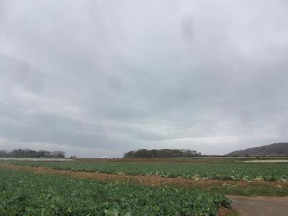 農業のトータルコーディネータ  イノウエ農商事のブログ-03311