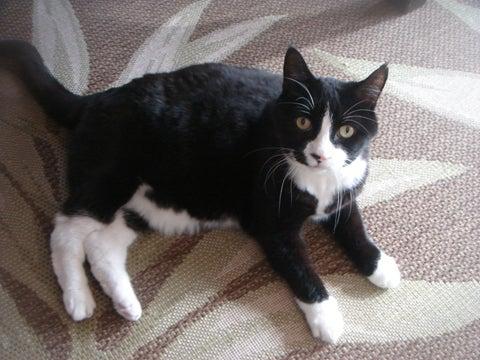 $ちょこっとニューヨーク-ラビオリという名のネコちゃん