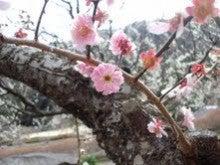 T-BODY  ~ボディメイクアドバイザーの美容レシピ~