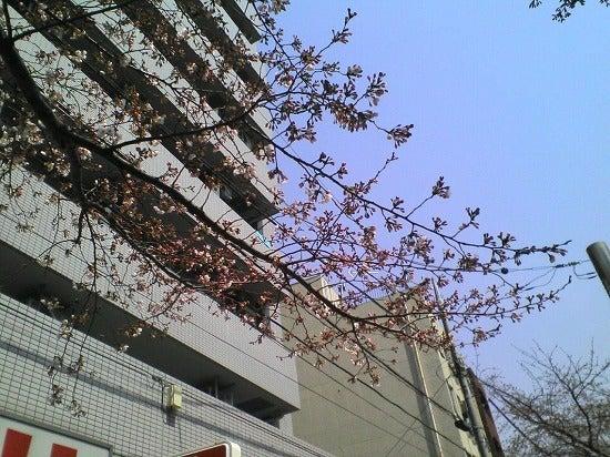 スーパーB級コレクション伝説-Japan Thank you3