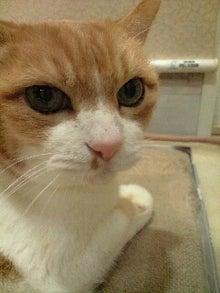 ずれずれブログ…湘南で猫と暮らせば…-120130_2050~0001.jpg