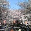目黒川の桜並木。