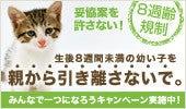 浦安の猫専門ペットシッター【キャットシッターME】舞浜・新浦安・京葉線 市川市-8週規制