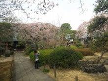 小江戸・川越社労士日記-120403_080331.jpg