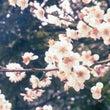 春の鎌倉旅③。