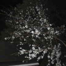 桜と共にブログを再開…