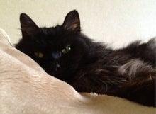 マーダルのブログ-ウチのネコ