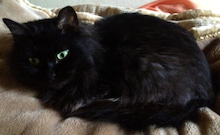 マーダルのブログ-ウチのネコ2