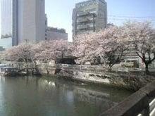 三度目で結(ユウ)-桜