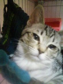 めっちゃんの猫ねこ坊主