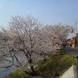 桜まつり・・・
