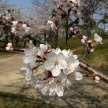 桜の時期に思うこと