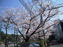 マンション屋さんの溜め息-sakura3