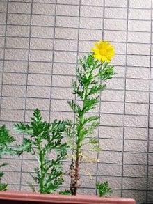 飛耳長目録-春菊1