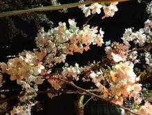 マーダルのブログ-桜4
