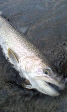 魚のともだち-120409_0556~02.jpg