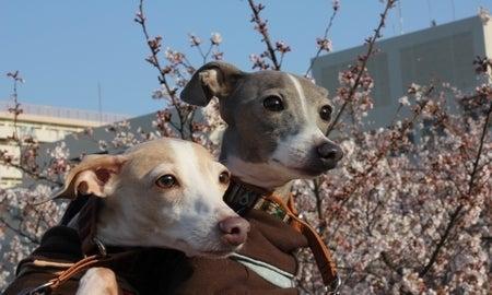 ありえないイタグレ生活と普通すぎる日常-sakura