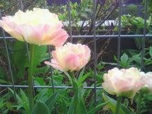 福岡市在住。小学生ママ日記-2012041008280000.jpg