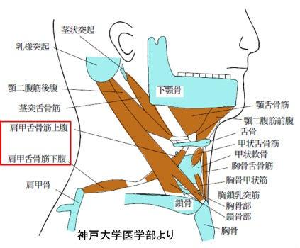 $上田で肩こり、ぎっくり腰、腰痛を改善する整骨院-首の筋肉