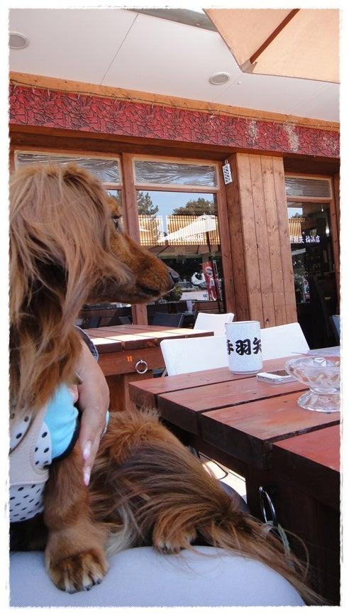 旅犬Lani&Leaのほほん風船記-手羽矢