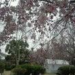 地元で花見(^o^)