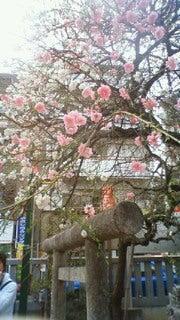 ひょっとすると…ひょっとするかも。浦和小町-201204101709000.jpg