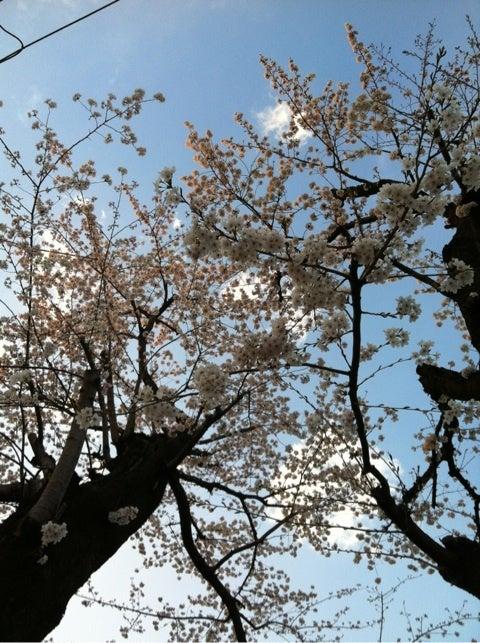 ♪野菜ソムリエsaorinのプチハッピーライフ♪今日4/11日(水)17時FM西東京84.2「YGCα」テーマ「お花見しようぜっ?」