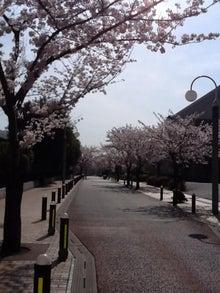 和光市長 松本たけひろの「持続可能な改革」日記-市役所北側通り