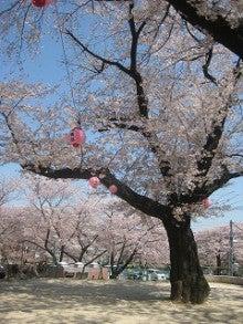 グループホームじゅうじょうの憩のブログ-4.12花見②