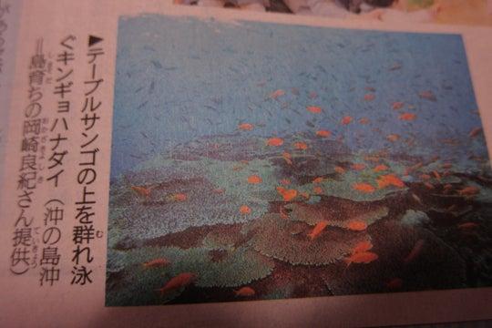 沖ノ島ダイビング~ヨシキの人生日記~