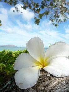 ラナイトランジット-flower