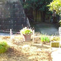 隣の芝生ばかり青く見…