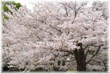 毎日はっぴぃ気分☆-さくら山の大桜