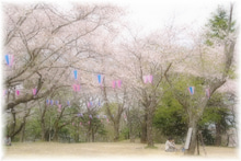 毎日はっぴぃ気分☆-桜吹雪