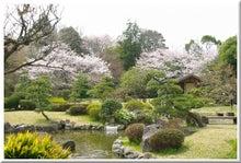 毎日はっぴぃ気分☆-日本庭園の桜