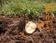 農トレ in 棚田【農業を好きになろう】-2