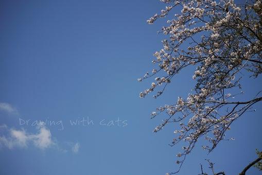 $猫とお絵かき -Drawing with Cats☆