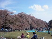 依田会計IT室長によるOBC奉行活用術-小金井公園 桜