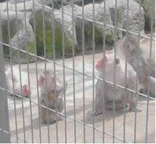 お客さまは、派遣スタッフさま-お猿さん