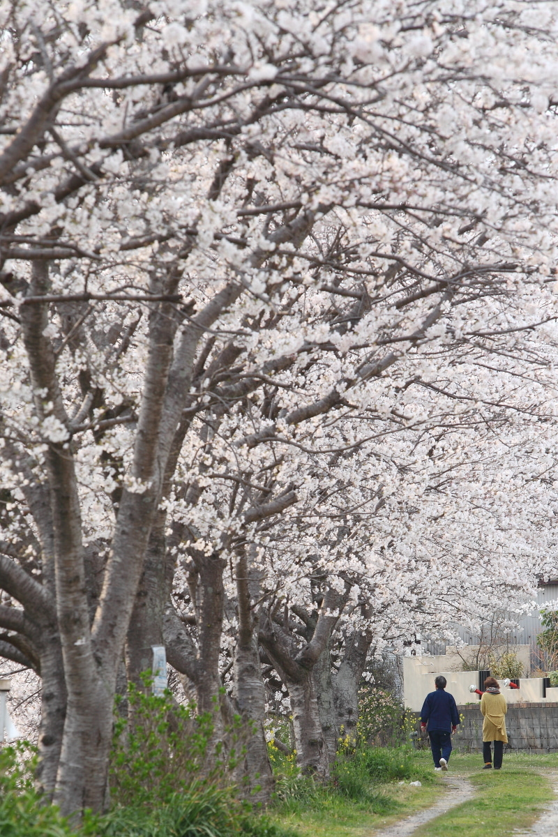 PHOTO-WALK ~撮影日記~