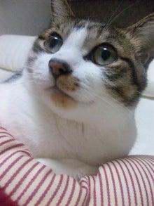 ◆ネコぶろぐ◆-120416_011449.jpg