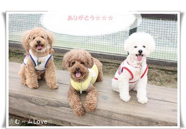 3トイプー☆む~ムLove☆