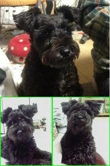 $HWJ☆犬猫を助けよう!☆迷子・保護・里親募集 情報集