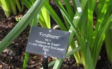 フィンドホーンのリソースパーソンよっちのブログ