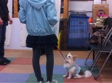 ペットアロマ&しつけ〜わんちゃんからのありがとうを広めたい!-ipodfile.jpg