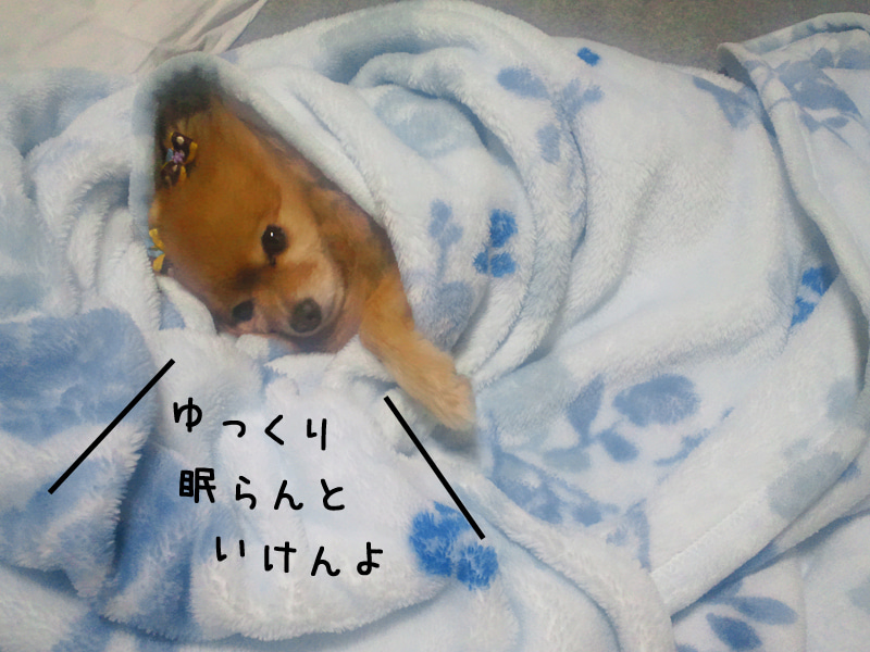 メイプル-ぷる、眠りをうながす