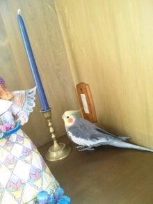 オカメインコのももちゃんと花教室と旅日記-120415_081347.jpg